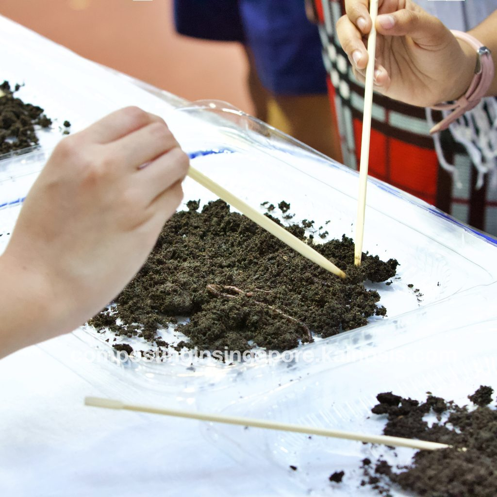 Participants using sticks to dig around a tray of live composting worms and vermicompost