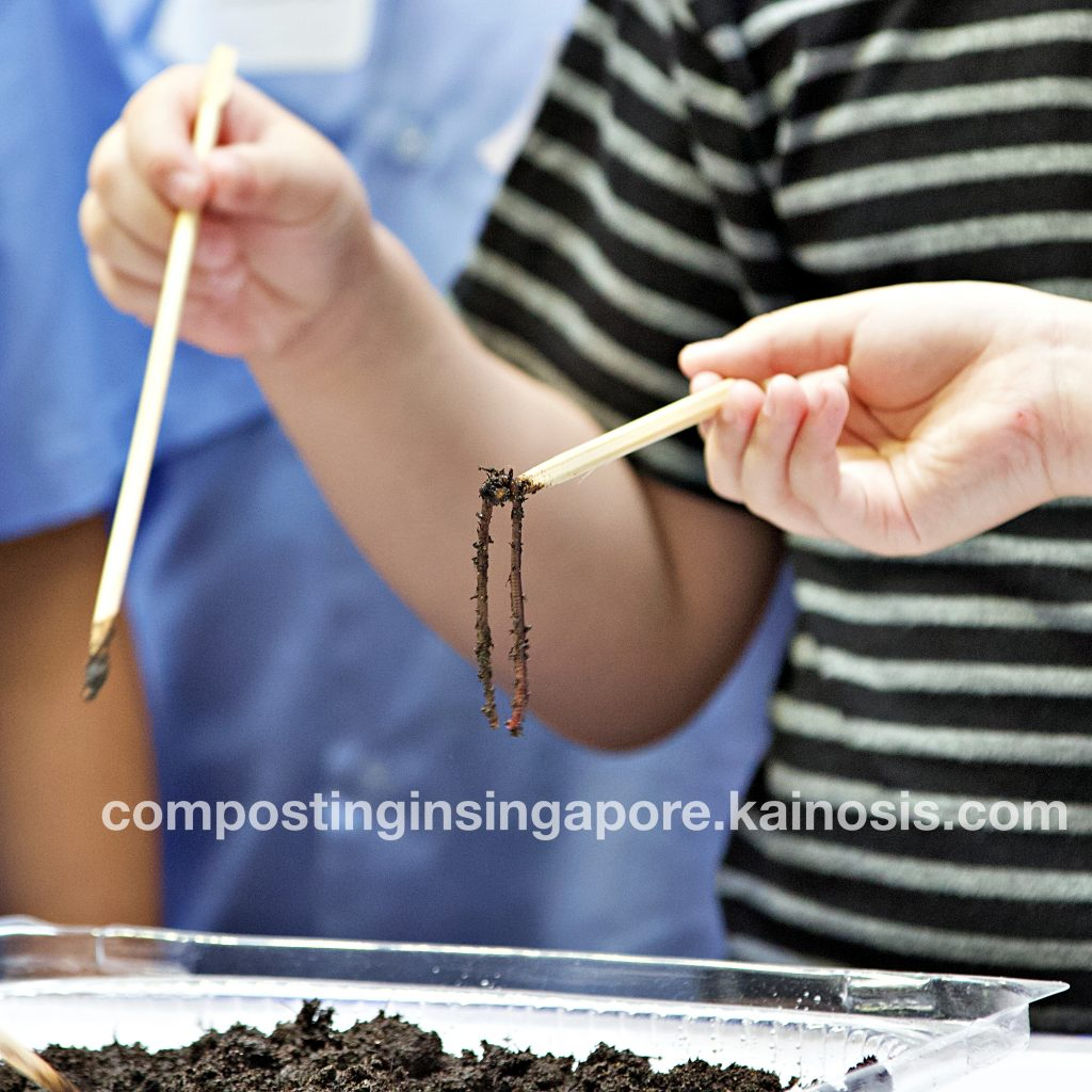 Lifting a composting worm out of the tray and taking a closer look