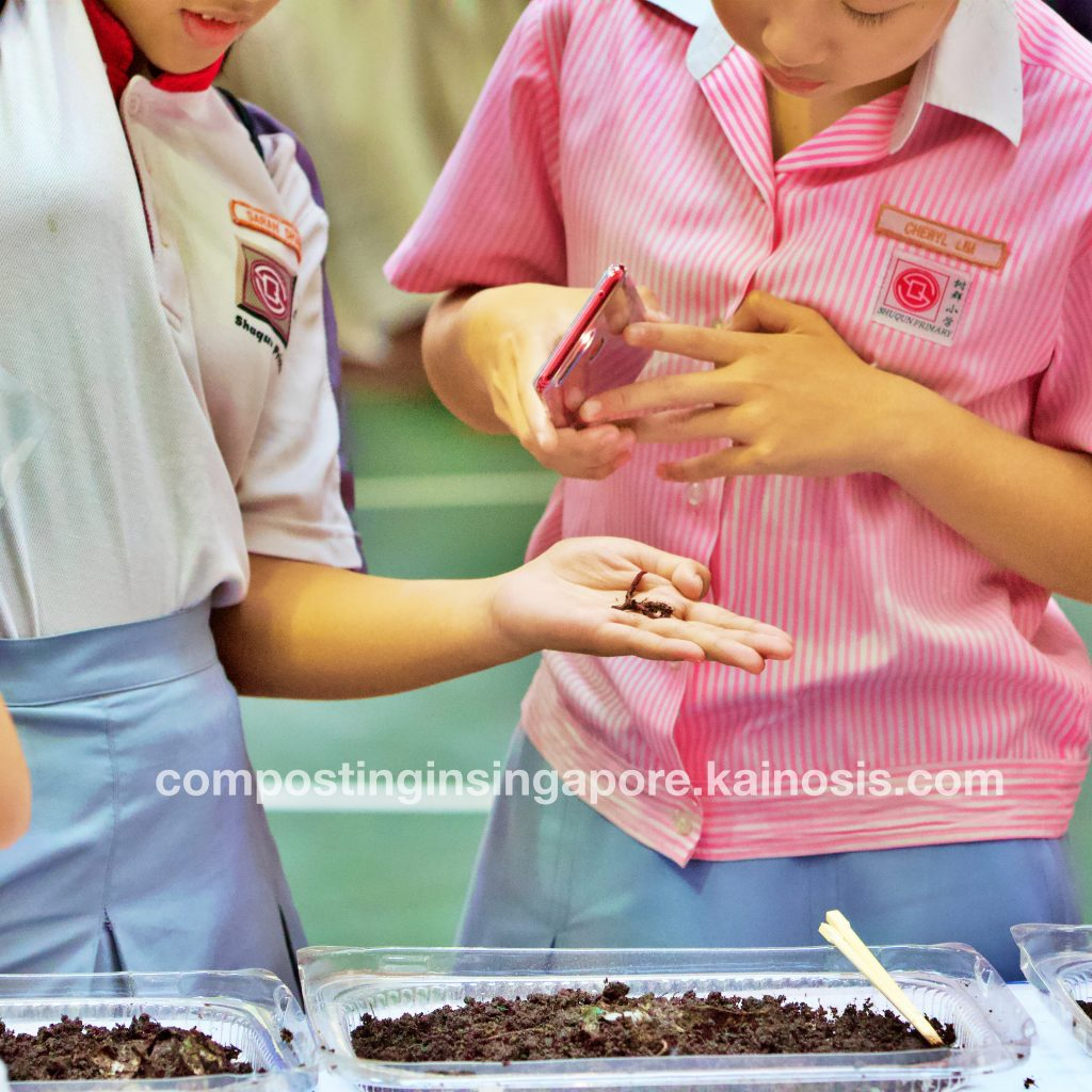 A girl holds on to a composting worm, while her friend shines a flashlight using her mobile phone - did you know that the local composting worm in Singapore has a nice blue tint under light?