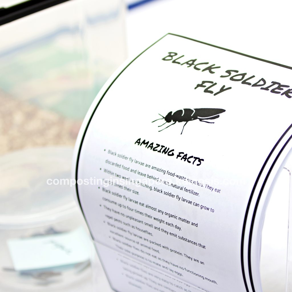 Our free handouts on the Black Soldier Fly - learn amazing facts about them and how they help recycle food waste