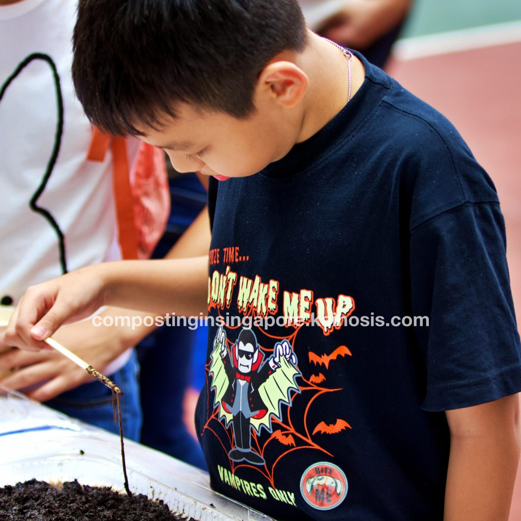 Observing a composting worm upclose - did you know that the local composting worm in Singapore is called the Malaysian Blue Worm?